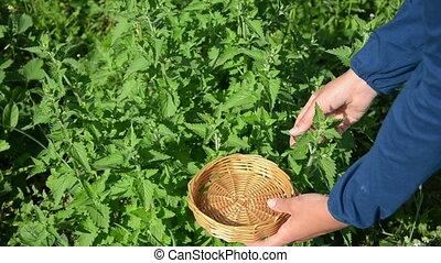 herbalist hand balm leaf