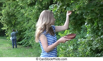 herbalist women pick linden flowers herbs from tree branches in park. 4K