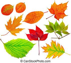 Herbarium. Collection of different leaves. - Herbarium. ...