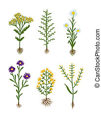 Herbarium flowers with roots, sketch for your design
