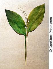 Herbarium on old wallpaper background.