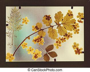 Herbarium - Set of herbarium wild dry pressed flowers and ...