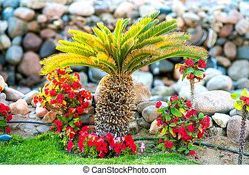 herbe, arbre, croissant, couvert, paume, petit, entouré, fleurir, pelouse, tropique, hôtel, yard., clair, vert, fleurs