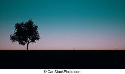 herbe, arbre, levers de soleil