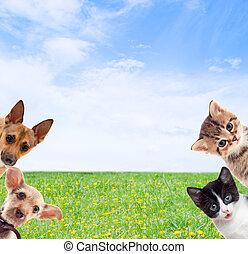 herbe, arrière-plan vert, animaux familiers