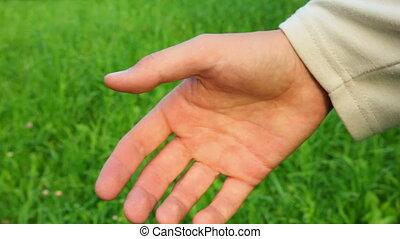 herbe, arrière-plan vert, famille, mains