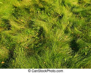 herbe, arrière-plan vert