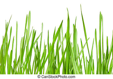 herbe, blé