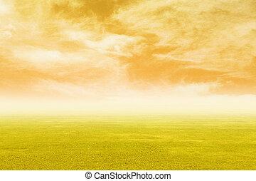 herbe champ, ciel, coucher soleil