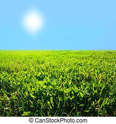 herbe champ, ciel