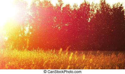 herbe champ, coucher soleil, 4
