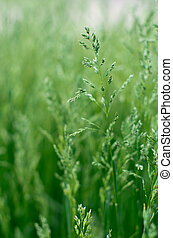 herbe champ, paysage vert, fond