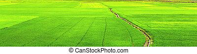 herbe champ, paysage vert
