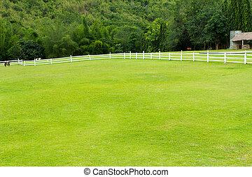herbe, cheval, barrière, vert