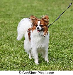 herbe, chien, debout