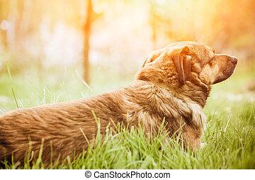 herbe, chien