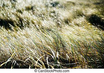 herbe, closeup, backlit