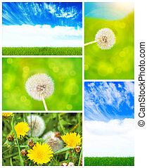 herbe, collage, pissenlit, ciel