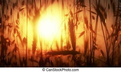 herbe, coucher soleil, 4k, classé