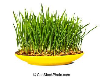 herbe, de, blé, développé