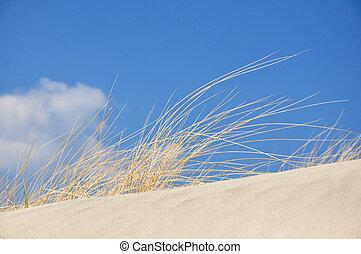 herbe, dune plage