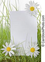 herbe, entre, signe, pâquerette, fleurs blanches