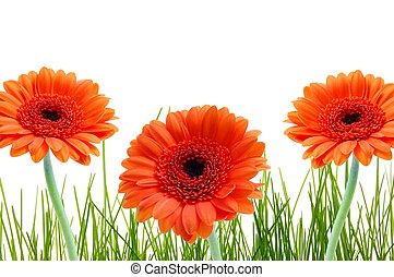 herbe, fleur, et, copyspace