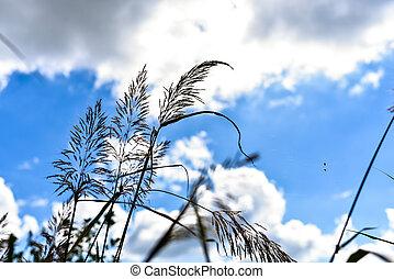 herbe, fleur