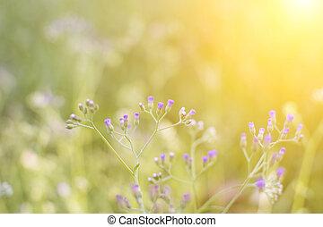 herbe, fleur, sur, les, pré, à, lumière soleil, nature, fond, printemps