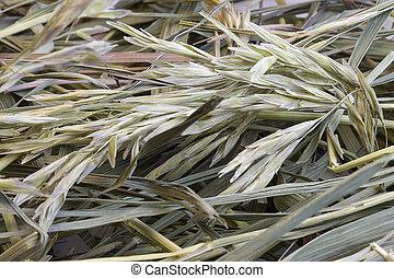 herbe, foin, fond