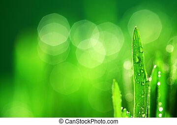 herbe, fond,  nature