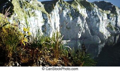 herbe, grand, frais, falaise rocheuse, océan