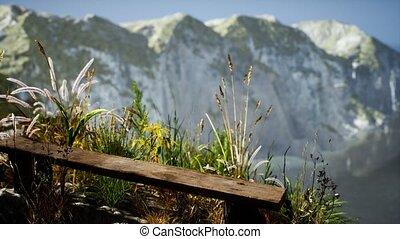 herbe, grand, frais, océan, falaise, rocheux
