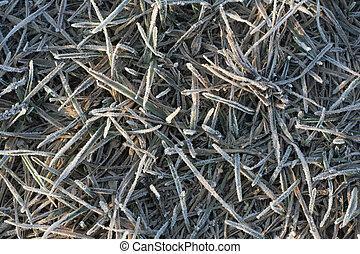 herbe, hoar-frost