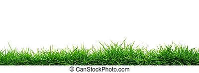 herbe, isolé, blanc