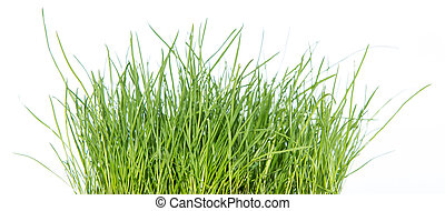 herbe, isolé, blanc, (side, view)