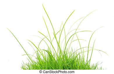 herbe, isolé, vert
