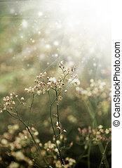 herbe, light., matin