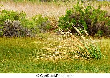 herbe, long, fond