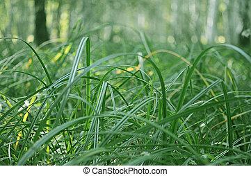 herbe, lumière soleil, vert