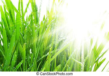 herbe, matin