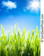 herbe, naturel, printemps, printemps, rosée, fond, frais, matin