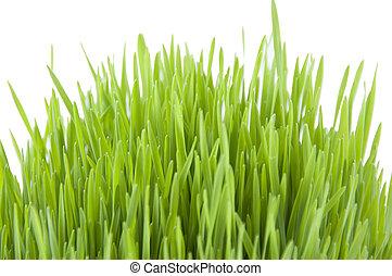 herbe, novruz