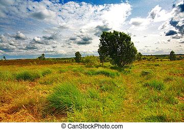 herbe, paysage, écossais