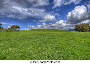 herbe, paysage vert