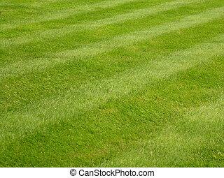 herbe pelouse, fauché