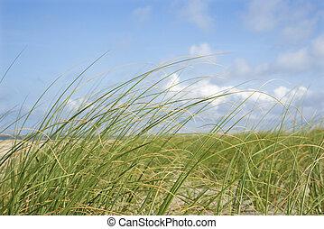 herbe, plage, wind., mouvementde va-et-vient
