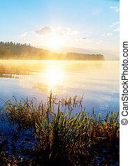 herbe, poindre, détail, matin, sun., temps, magique, halm, lac