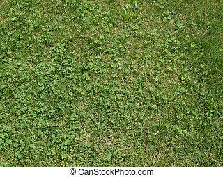herbe, pré