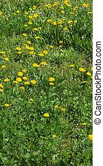 herbe, -, pré, vertical